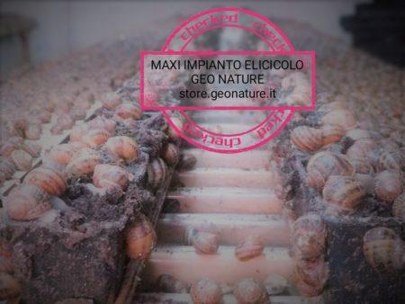 GEO OFFERTA MAXI